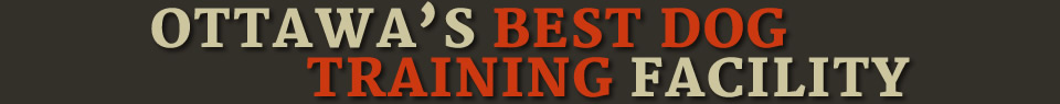 Ottawa's Best Dog Training Facility